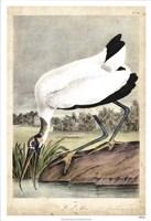 "Wood Ibis by John James Audubon - 26"" x 38"""