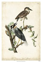 "Night Heron by John James Audubon - 26"" x 38"", FulcrumGallery.com brand"