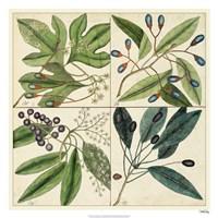 """Catesby Leaf Quadrant I by Marc Catesby - 26"""" x 26"""""""