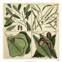 """Catesby Leaf Quadrant II by Marc Catesby - 26"""" x 26"""""""