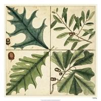 """Catesby Leaf Quadrant III by Marc Catesby - 26"""" x 26"""""""