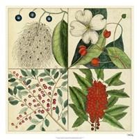 """Catesby Botanical Quadrant II by Marc Catesby - 26"""" x 26"""""""