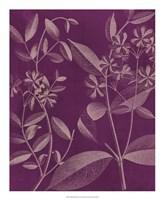 Modern Botany III Fine Art Print