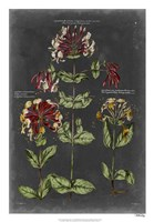 "Vintage Botanical Chart I by Vision Studio - 18"" x 26"""