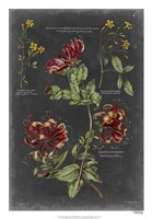 "Vintage Botanical Chart II by Vision Studio - 18"" x 26"""
