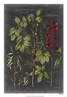 "Vintage Botanical Chart III by Vision Studio - 18"" x 26"""