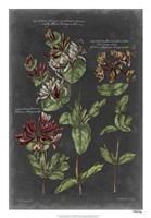 "Vintage Botanical Chart IV by Vision Studio - 18"" x 26"""