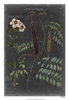 "Vintage Botanical Chart V by Vision Studio - 18"" x 26"""