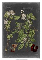 "Vintage Botanical Chart VI by Vision Studio - 18"" x 26"""