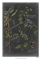 "Vintage Botanical Chart VII by Vision Studio - 18"" x 26"""