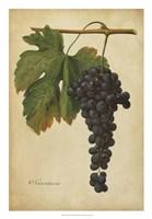 Vintage Vines I Framed Print