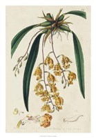 Spring Orchid VI Fine Art Print