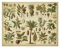"Classification of Tropical Plants by Vision Studio - 32"" x 26"""