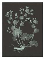 "Mint & Charcoal Nature Study I by Vision Studio - 20"" x 26"""