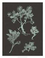 "Mint & Charcoal Nature Study II by Vision Studio - 20"" x 26"""
