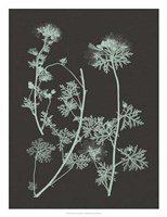 """Mint & Charcoal Nature Study IV by Vision Studio - 20"""" x 26"""""""
