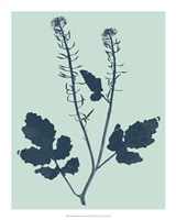 Indigo & Mint Botanical Study I Fine Art Print