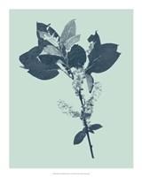 """Indigo & Mint Botanical Study V by Vision Studio - 16"""" x 20"""""""