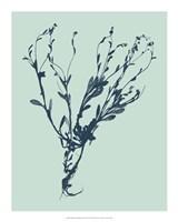 "Indigo & Mint Botanical Study VI by Vision Studio - 16"" x 20"""