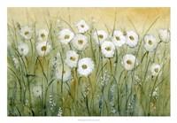 "Daisy Spring I by Timothy O'Toole - 26"" x 18"""