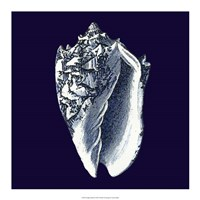 "Indigo Shells II by Vision Studio - 18"" x 18"""