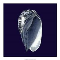 """Indigo Shells V by Vision Studio - 18"""" x 18"""""""