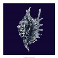"Indigo Shells VI by Vision Studio - 18"" x 18"""