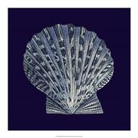 "Indigo Shells VIII by Vision Studio - 18"" x 18"""