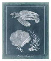 "Azure Sea Turtle Study II by Vision Studio - 22"" x 26"" - $40.49"