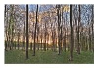 "Secret Sunset by Assaf Frank - 39"" x 28"""