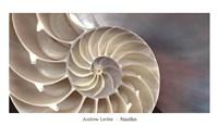 Nautilus Fine Art Print