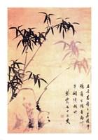 Sin Wi, Bamboos Fine Art Print