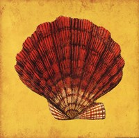 """Fan Shell by Stephanie Marrott - 12"""" x 12"""" - $10.49"""