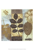 Patterns of Nature II Fine Art Print