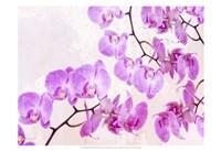 Fluttering Orchid I Fine Art Print