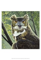 Great Horned Owl Fine Art Print