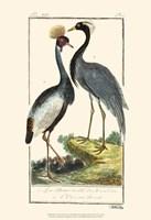 Buffon Cranes & Herons II Fine Art Print