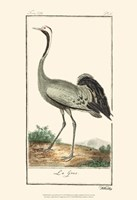 Buffon Cranes & Herons IV Fine Art Print