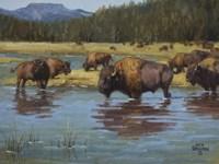 Buffalo Crossing by Jack Sorenson - various sizes