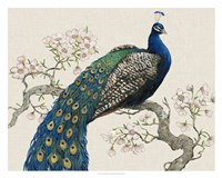 Peacock & Blossoms I Framed Print