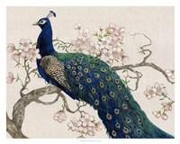 Peacock & Blossoms II Framed Print