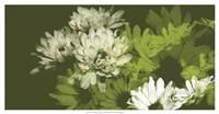 Daisy Garden II Framed Print
