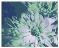 Teal Bloom II Fine Art Print