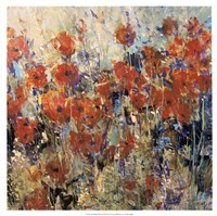 Red Poppy Field II by Timothy O'Toole - various sizes - $27.99