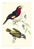 Lemaire Birds IV Fine Art Print