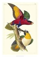 Lemaire Parrots I Fine Art Print