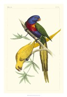 Lemaire Parrots IV Fine Art Print