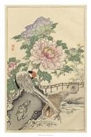 Pheasant and Peony Fine Art Print