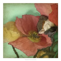 Aquatic Poppies I Framed Print