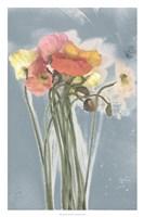 Poppy Spray III Framed Print